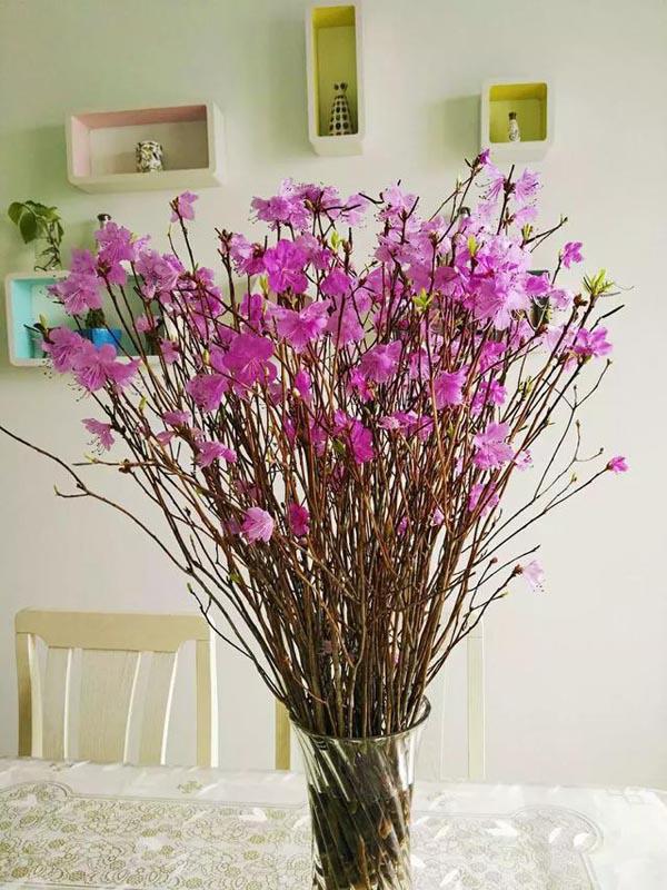Chị em rần rần mua hoa đỗ quyên ngủ đông về chơi Tết vì quá đẹp mà không hề hay biết nó có thể gây ngộ độc - Ảnh 2.