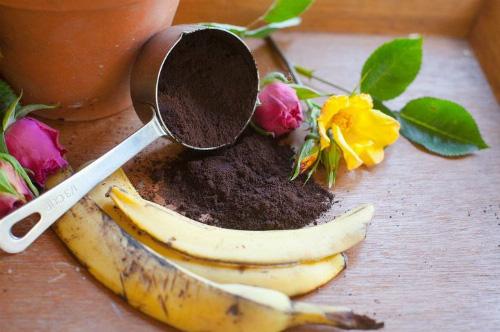 Không cần tốn tiền đi mua phân bón, vườn cây của bạn sẽ tốt vù vù với những thực phẩm bỏ đi trong nhà bếp này - Ảnh 6.