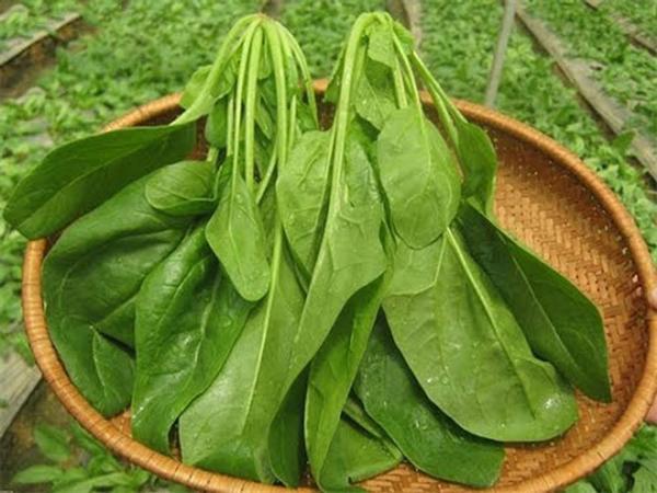 6 loại rau củ nên ăn nhiều vì công dụng ngừa ung thư cực tốt - Ảnh 2.
