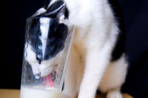 Sữa để lâu trong tủ lạnh hết hạn vì quên uống, đừng bỏ đi không bạn sẽ hối tiếc bởi nó có rất nhiều công dụng - Ảnh 2.
