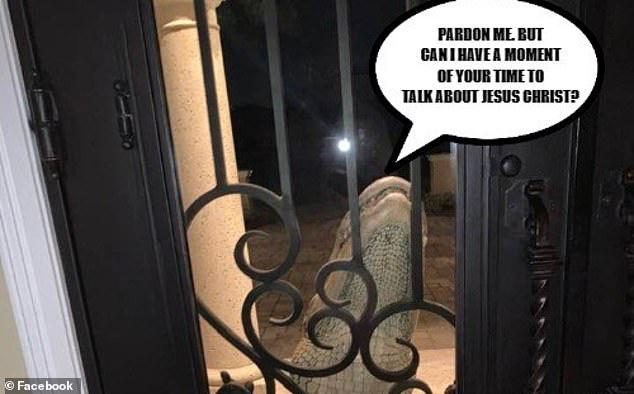 Nghe tiếng động lạ, gia đình hoảng hốt với cảnh tượng con cá sấu đu ngay cửa nhưng thu hút sự chú ý lại là chú mèo cưng trong nhà - Ảnh 3.