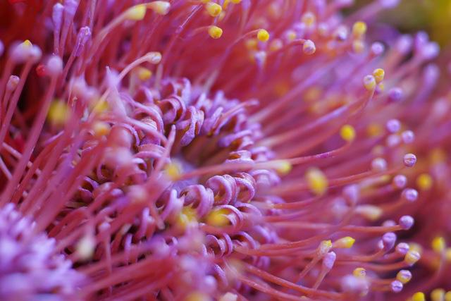 Tặng những loại hoa này đảm bảo vợ, bạn gái cũng phải ngỡ ngàng vì lạ - Ảnh 14.