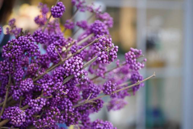 Tặng những loại hoa này đảm bảo vợ, bạn gái cũng phải ngỡ ngàng vì lạ - Ảnh 16.