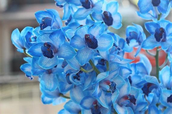 Tặng những loại hoa này đảm bảo vợ, bạn gái cũng phải ngỡ ngàng vì lạ - Ảnh 5.
