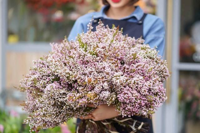 Tặng những loại hoa này đảm bảo vợ, bạn gái cũng phải ngỡ ngàng vì lạ - Ảnh 8.