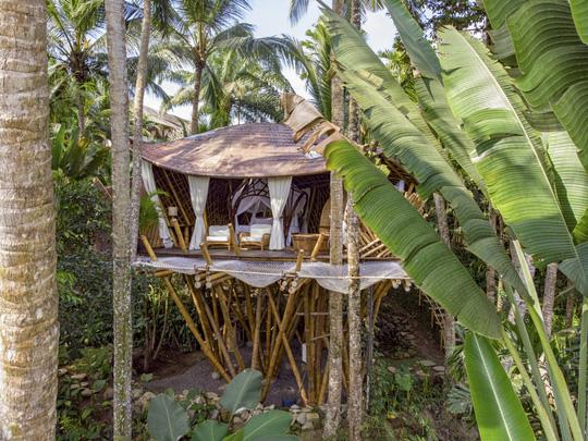Ngôi nhà trên cây đẹp đến mức ai cũng ước ao ghé thăm - Ảnh 1.