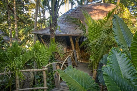 Ngôi nhà trên cây đẹp đến mức ai cũng ước ao ghé thăm - Ảnh 3.