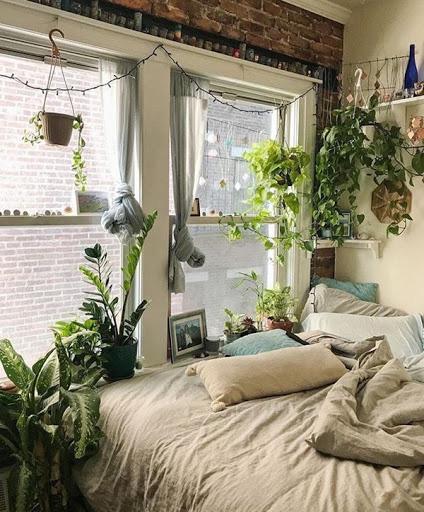 Sai lầm phổ biến khi trồng cây xanh trong nhà khiến cây bị úng, chết khô - Ảnh 5.