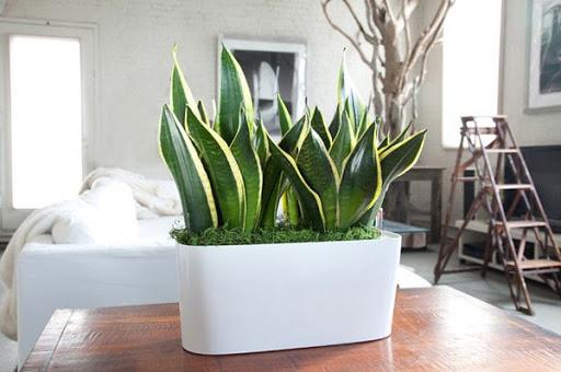 Sai lầm phổ biến khi trồng cây xanh trong nhà khiến cây bị úng, chết khô - Ảnh 4.