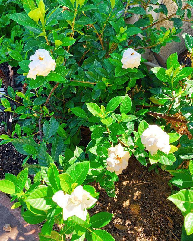 Phạm Hương chăm được một khu vườn trĩu quả bên Mỹ mà bất cứ nông dân thành phố nào cũng phải mê - Ảnh 12.