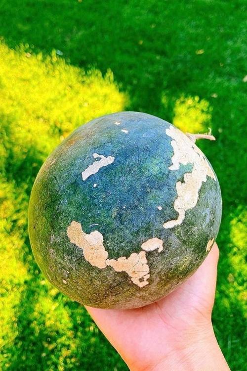 Phạm Hương chăm được một khu vườn trĩu quả bên Mỹ mà bất cứ nông dân thành phố nào cũng phải mê - Ảnh 5.