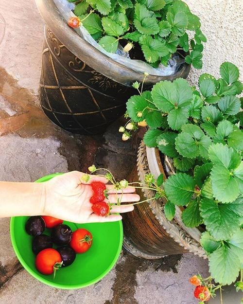 Phạm Hương chăm được một khu vườn trĩu quả bên Mỹ mà bất cứ nông dân thành phố nào cũng phải mê - Ảnh 6.