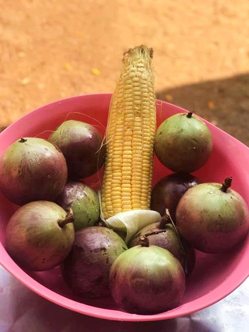 Kiều Trinh thu hoạch mỏi tay sau một năm làm vườn ở Bình Phước - Ảnh 12.