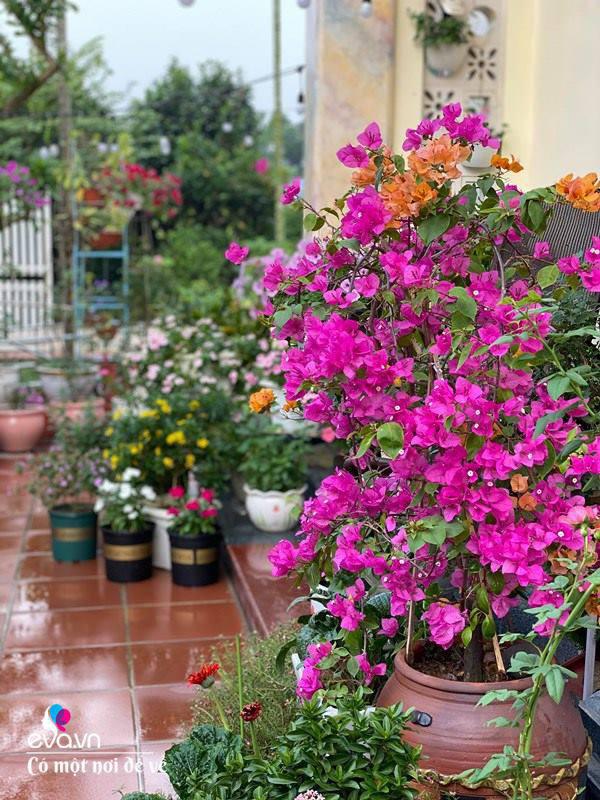 Chồng bỏ tiền mua lốp xe cũ, mẹ 8x trồng hoa, sau 2 năm thành mảnh vườn 200m2 tuyệt đẹp - Ảnh 5.