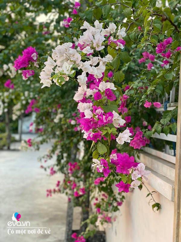 Chồng bỏ tiền mua lốp xe cũ, mẹ 8x trồng hoa, sau 2 năm thành mảnh vườn 200m2 tuyệt đẹp - Ảnh 6.