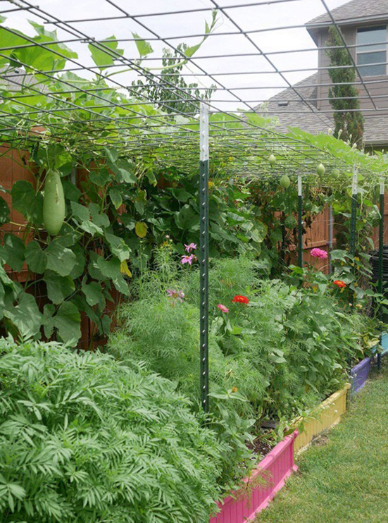 Con gái tặng mẹ vườn rau Việt trên đất Mỹ  - Ảnh 6.