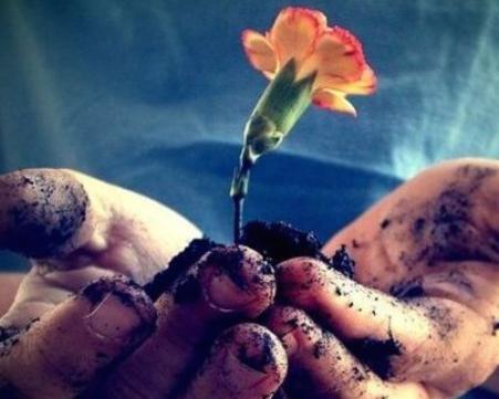 Nuôi dưỡng tình yêu để mãi được đơm hoa từng ngày - Ảnh 1.