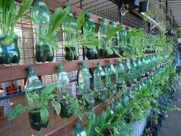 Tận dụng vỏ chai nước ngọt làm thành khu vườn khiến ai cũng mê mẩn - Ảnh 11.