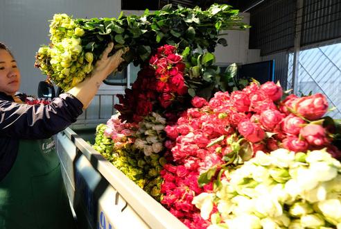 Chuẩn bị hoa bán 8/3: Hoa hồng Đà Lạt chỉ mong bán được 3.000 đồng/bông vì COVID-19 - Ảnh 3.