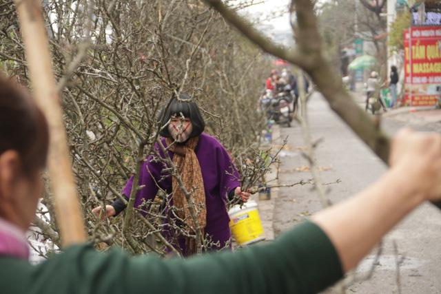 Lạc vào rừng hoa lê giá hàng triệu đồng một cành giữa lòng Hà Nội - Ảnh 3.