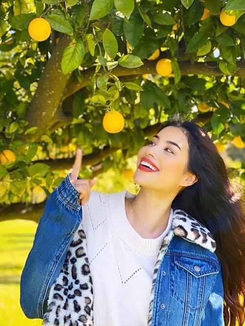 Hoa hậu Phạm Hương khoe thu hoạch trái cây tươi ngon trong vườn nhà ở Mỹ - Ảnh 7.