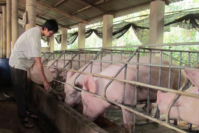 Thách thức lệnh giảm giá, thịt lợn cố thủ ở mức cao - Ảnh 2.