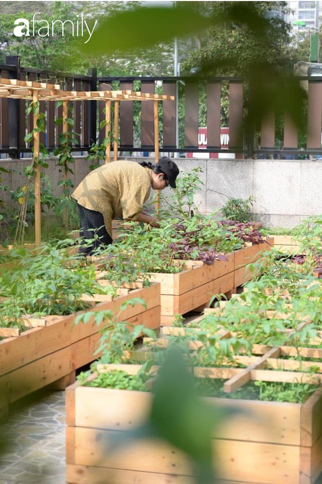 Chuyên gia trong lĩnh vực nhà vườn tại Hà Nội chia sẻ cách trồng rau đúng cách, đảm bảo nhà phố thoải mái rau sạch cho cả gia đình - Ảnh 10.
