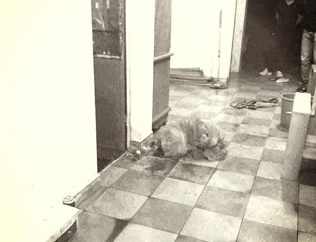 Nghi vấn nữ sinh lớp 9 ở Hải Phòng bị sát hại tại nhà riêng giữa đêm khuya - Ảnh 1.