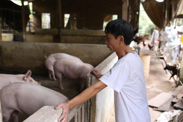 Ngành nông nghiệp chuẩn bị nguồn thực phẩm cung ứng cho người dân trong dịch COVID-19 ra sao? - Ảnh 2.