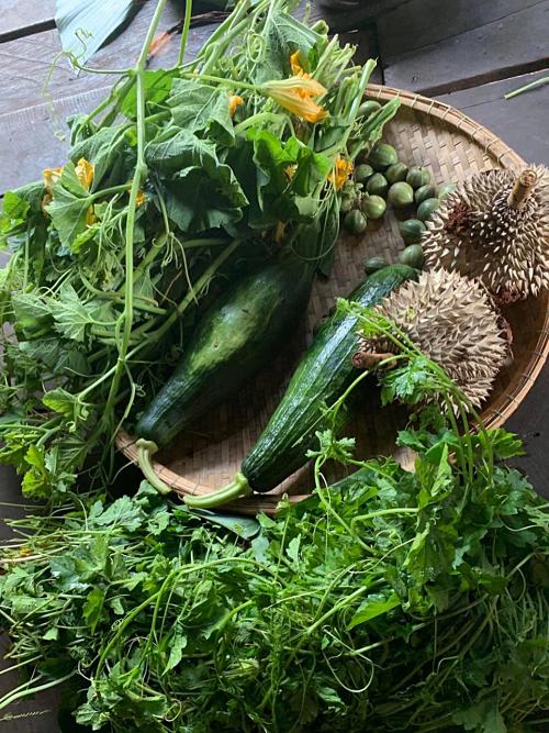 Hoa hậu HHen Niê mải mê thu hoạch rau trái trong vườn, rẫy - Ảnh 7.