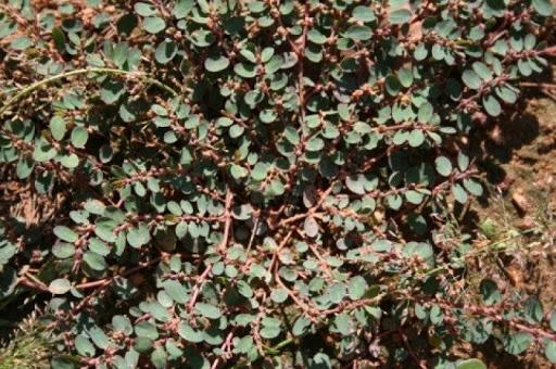 Kỳ lạ cách chữa dị ứng thời tiết đơn giản hiệu quả bằng cỏ dại nhưng rất ít người biết - Ảnh 2.