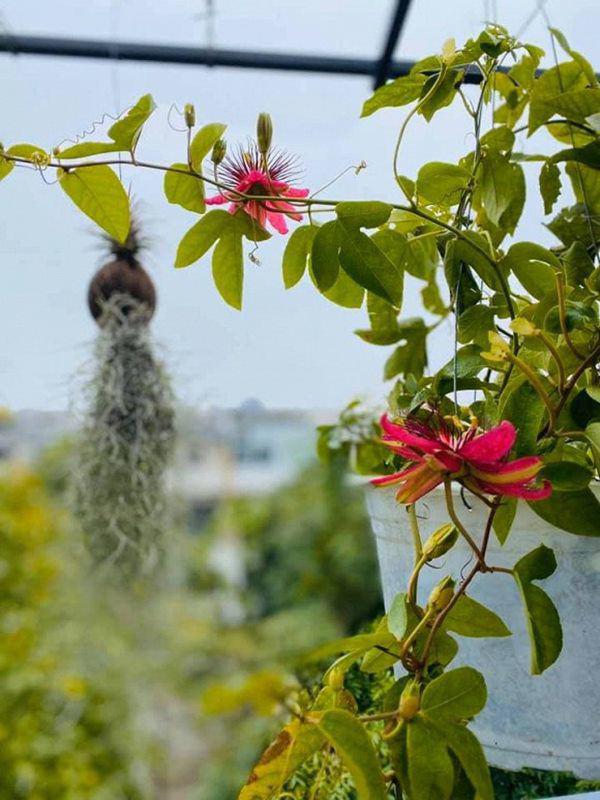 Khu vườn xanh mướt trong biệt thự ở ngoại thành của ca sĩ Xuân Nhị, tận mắt mới thấy cực hoàng tráng - Ảnh 10.