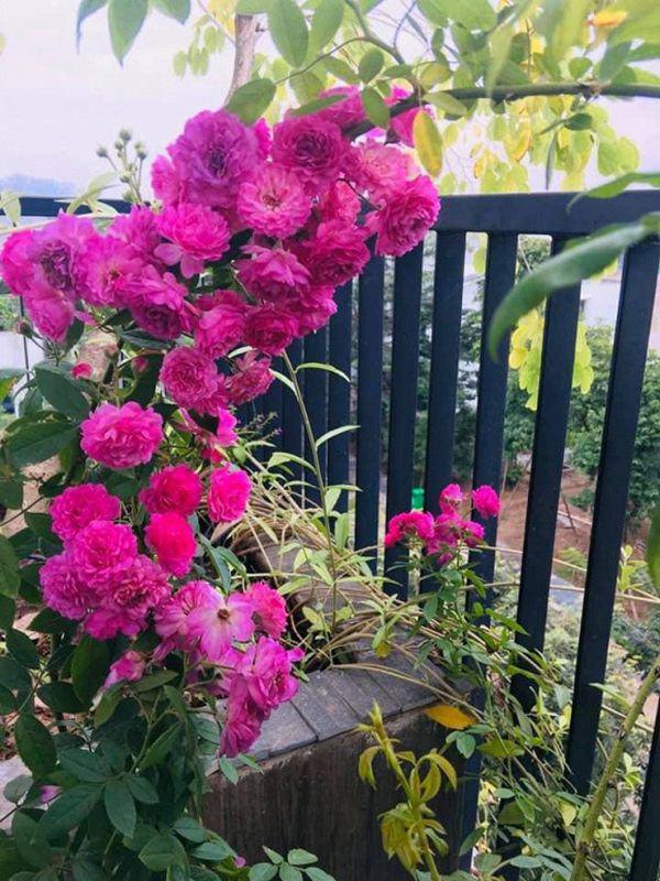 Khu vườn xanh mướt trong biệt thự ở ngoại thành của ca sĩ Xuân Nhị, tận mắt mới thấy cực hoàng tráng - Ảnh 11.