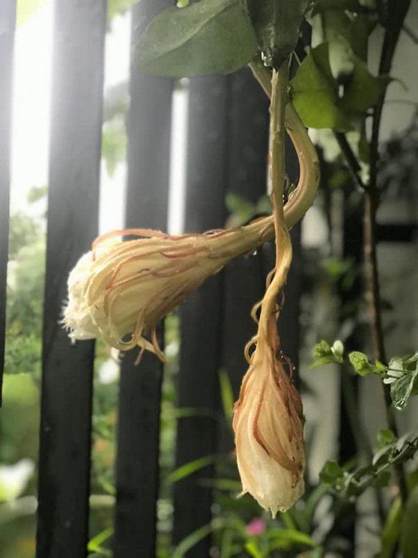 Khu vườn xanh mướt trong biệt thự ở ngoại thành của ca sĩ Xuân Nhị, tận mắt mới thấy cực hoàng tráng - Ảnh 13.