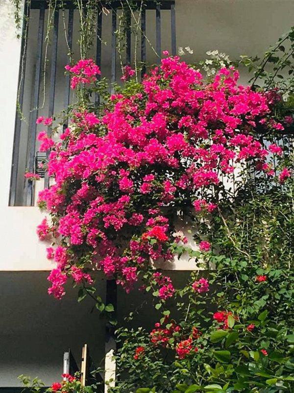 Khu vườn xanh mướt trong biệt thự ở ngoại thành của ca sĩ Xuân Nhị, tận mắt mới thấy cực hoàng tráng - Ảnh 12.