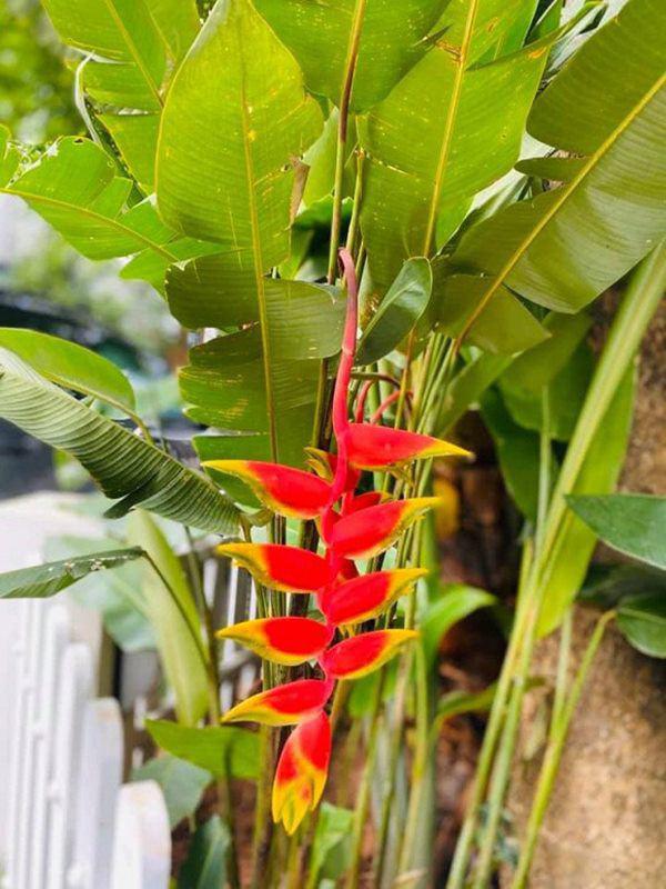 Khu vườn xanh mướt trong biệt thự ở ngoại thành của ca sĩ Xuân Nhị, tận mắt mới thấy cực hoàng tráng - Ảnh 15.