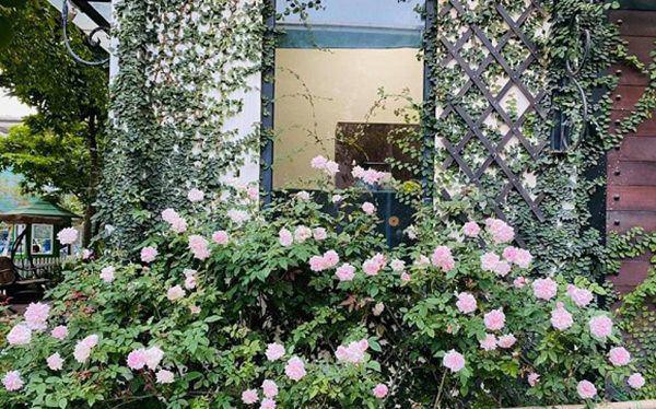 Khu vườn xanh mướt trong biệt thự ở ngoại thành của ca sĩ Xuân Nhị, tận mắt mới thấy cực hoàng tráng - Ảnh 8.