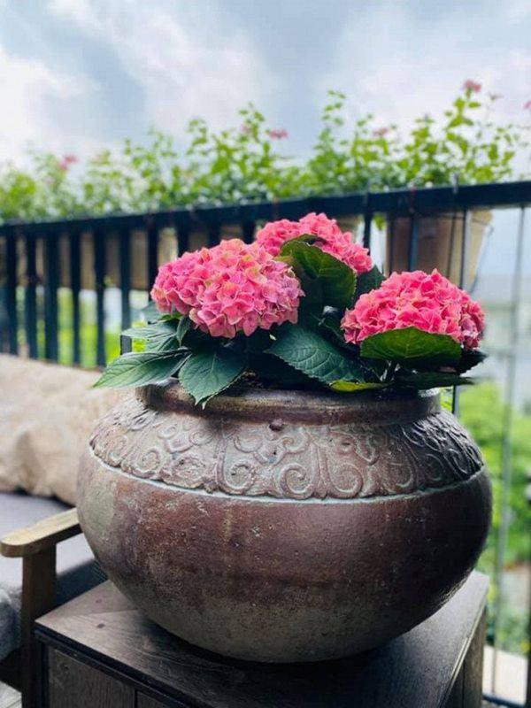 Khu vườn xanh mướt trong biệt thự ở ngoại thành của ca sĩ Xuân Nhị, tận mắt mới thấy cực hoàng tráng - Ảnh 9.