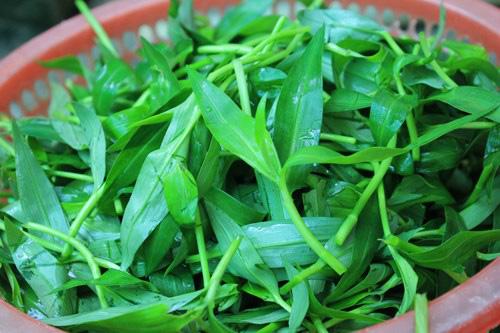 Lạ lùng loài cỏ dại mọc tua tủa sau mưa không ngờ lại là món ăn khiến chị em đổ xô săn lùng - Ảnh 3.