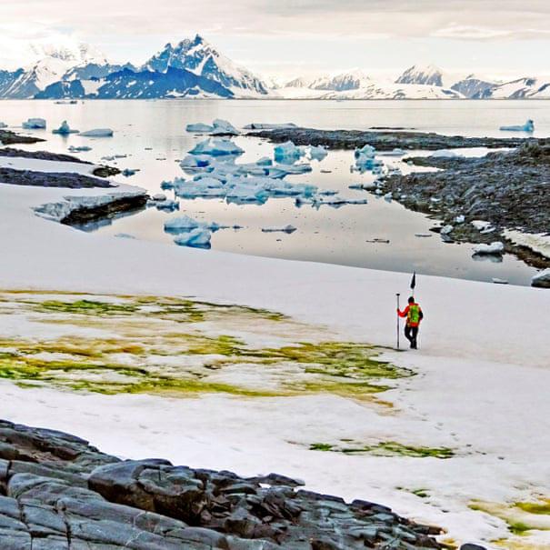 Kỳ lạ tuyết ở Nam Cực chuyển màu xanh lá và ai biết lý do cũng bất ngờ - Ảnh 1.