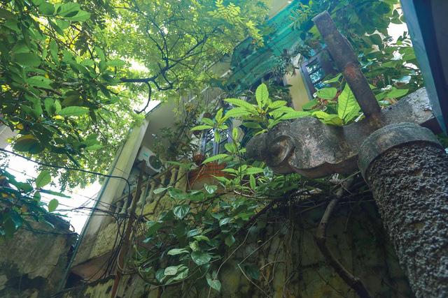Biệt thự vườn rộng 700m2 của đại gia kim hoàn phố cổ Hà Nội một thời - Ảnh 5.