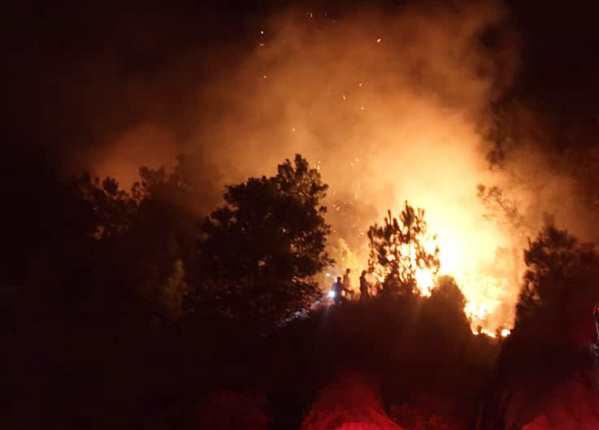 Liên tiếp cháy rừng ở Nghệ An - Ảnh 1.