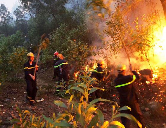 Nghệ An: Chủ tịch tỉnh chỉ đạo làm rõ nguyên nhân, thủ phạm gây ra cháy rừng - Ảnh 3.