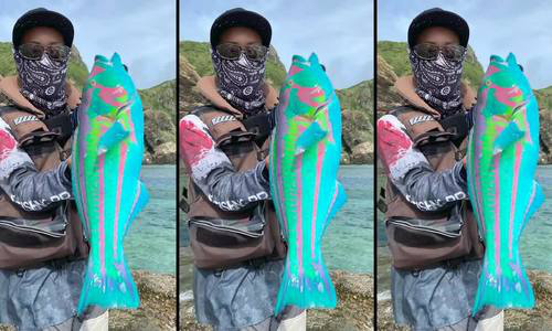 Con cá có màu sắc như trong thế giới huyền thoại - Ảnh 2.