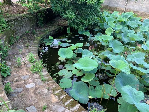 Sân vườn trong biệt thự bạc tỷ của 3 nam diễn viên nổi tiếng nhất nhì showbiz Việt, ai nhìn cũng phải ngưỡng mộ - Ảnh 15.