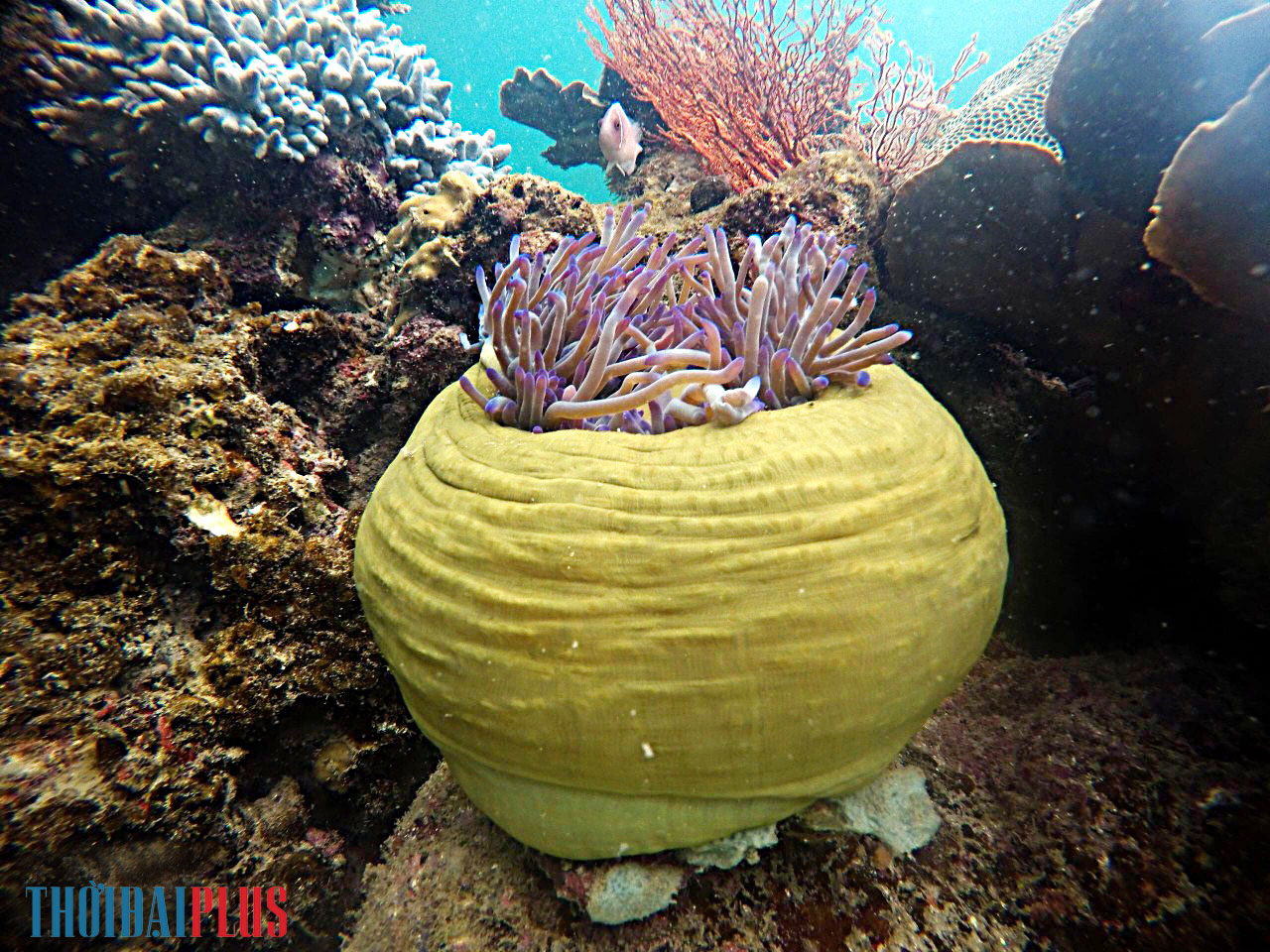"""Câu chuyện những """"vị thần"""" bảo vệ san hô Hòn Thơm - Ảnh 7."""