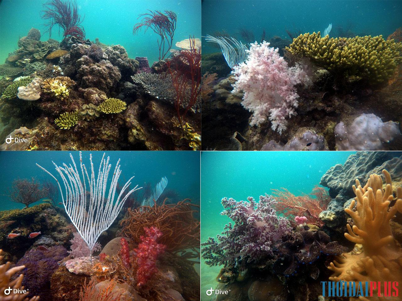 """Câu chuyện những """"vị thần"""" bảo vệ san hô Hòn Thơm - Ảnh 6."""