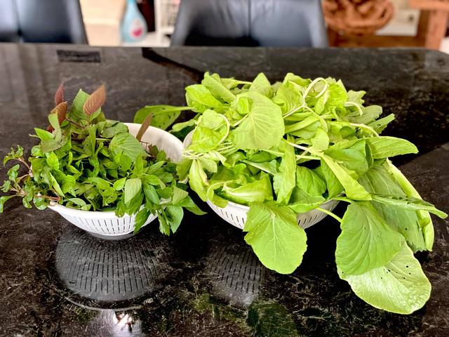 Vườn rau ăn không xuể trong biệt thự 200m2 của Á hậu Trịnh Kim Chi, ngạc nhiên nhất là chi phí đầu tư chỉ... 3 triệu đồng - Ảnh 12.