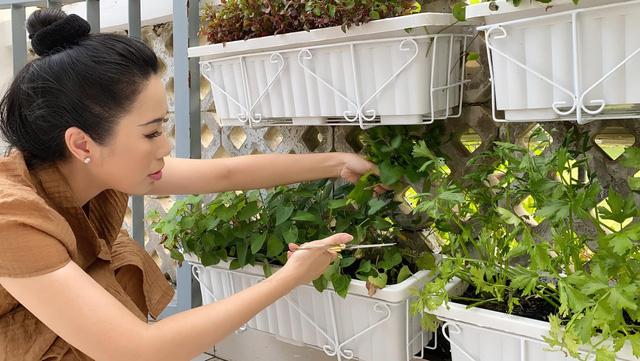 Vườn rau ăn không xuể trong biệt thự 200m2 của Á hậu Trịnh Kim Chi, ngạc nhiên nhất là chi phí đầu tư chỉ... 3 triệu đồng - Ảnh 7.