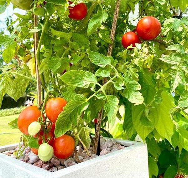 Vườn rau ăn không xuể trong biệt thự 200m2 của Á hậu Trịnh Kim Chi, ngạc nhiên nhất là chi phí đầu tư chỉ... 3 triệu đồng - Ảnh 10.